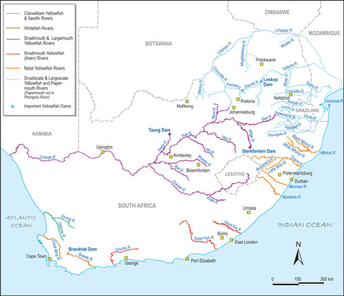 Distribution of Yellowfish in South Africa